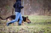Předlohy a její pes poslušný (německý ovčák)