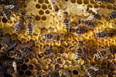 Macro shot of bees