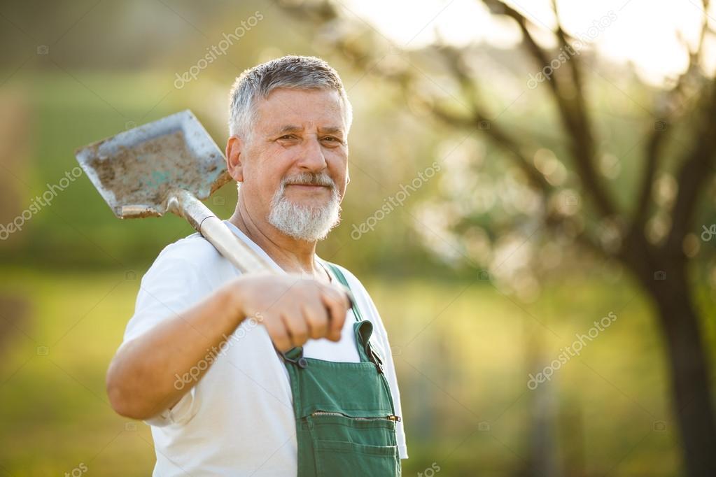 Handsome senior man gardening in his garden