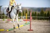 Springreiterin mit Pferd
