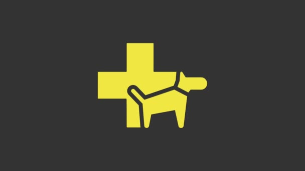 Yellow Veterinary clinic symbol icon isolated on grey background. Cross with dog veterinary care. Pet First Aid sign. 4K Video motion graphic animation