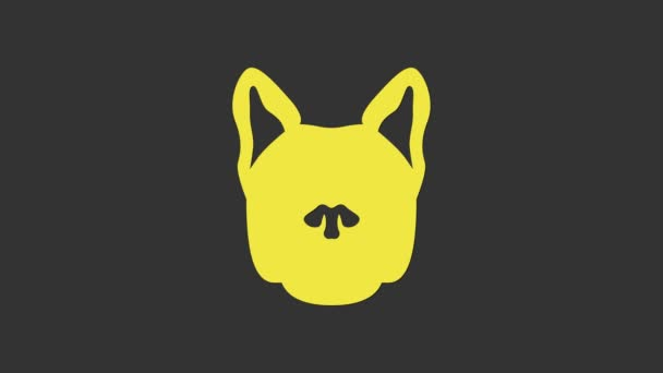 Sárga Kutya ikon elszigetelt szürke háttér. 4K Videó mozgás grafikus animáció