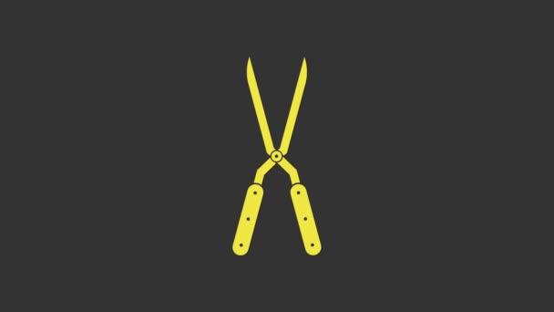 Sárga Kertészeti olló kézzel készített nyírás ikon elszigetelt szürke háttér. Fa fogantyúkkal metszett olló. 4K Videó mozgás grafikus animáció