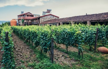 vineyard in Georgia