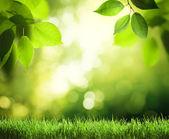 den v sunny forest