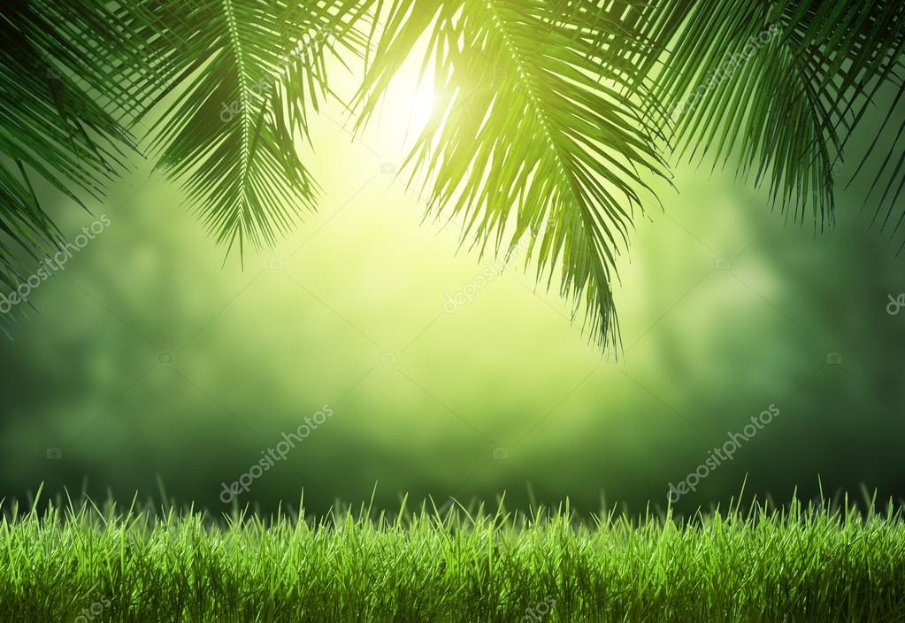 tropical forest in sunny day