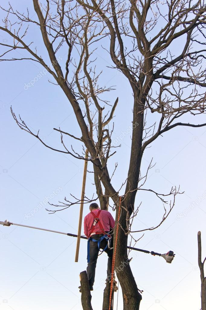 A tree surgeon cuts and trims a tree over sky