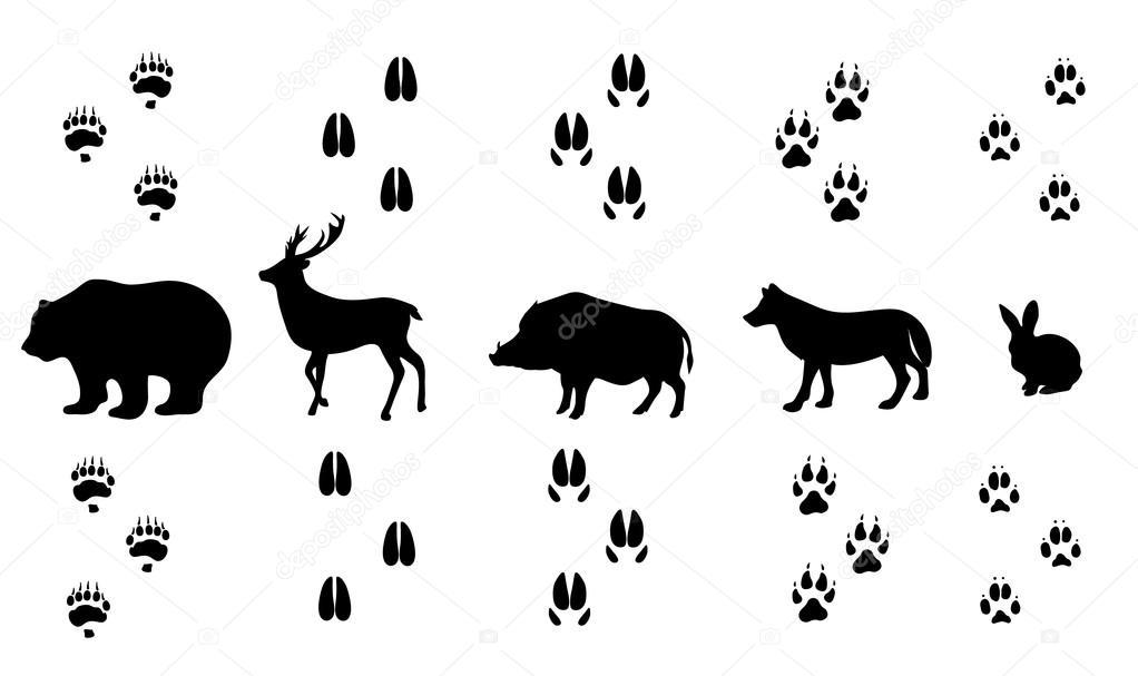 квартиру картинки следы диких животных сможете это