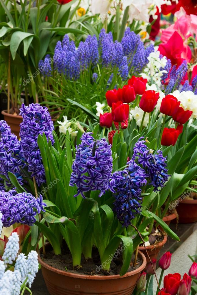 colorful flower shop