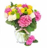 fiori rosa hortensia