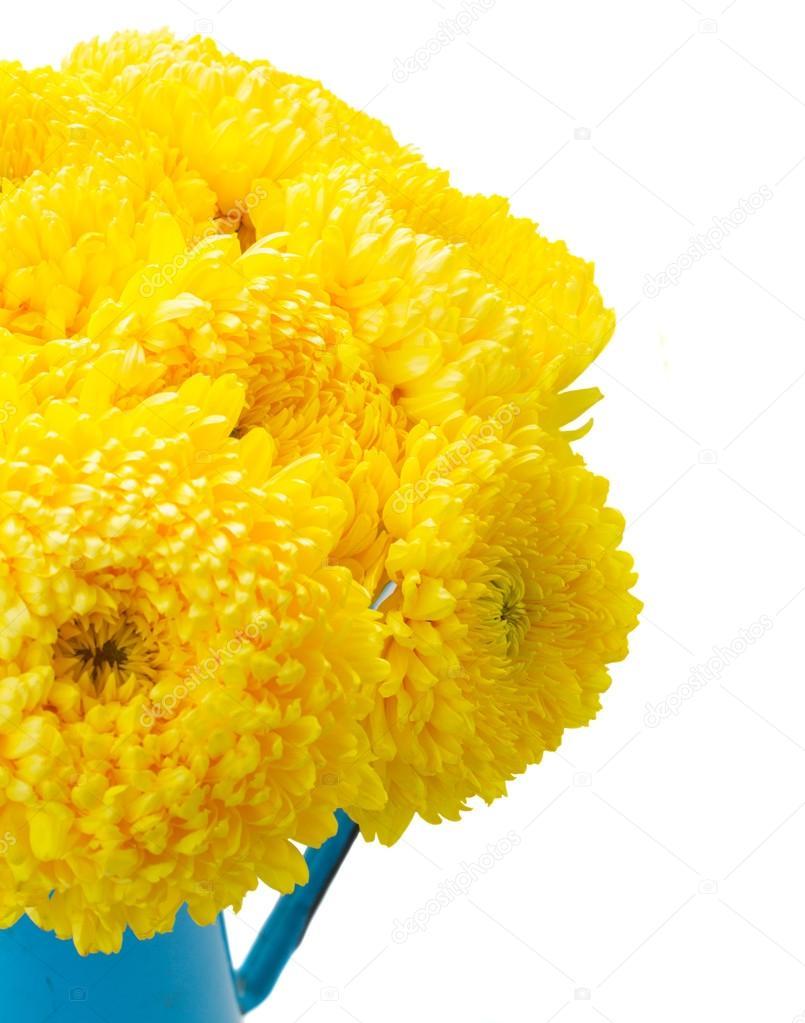 Yellow Mum Flowers Stock Photo Neirfys 83150356