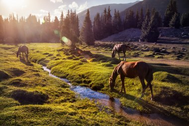 Horses in the mountains