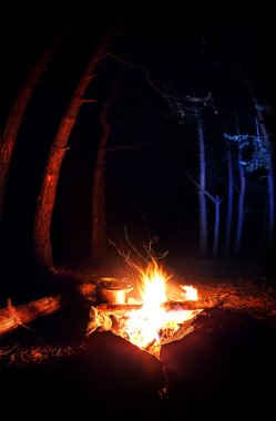 Campfire in the dark forest