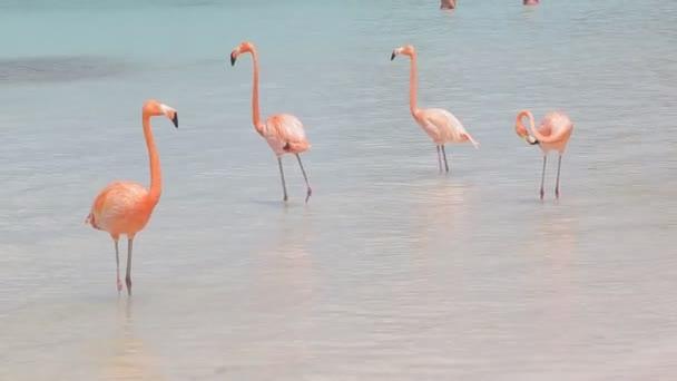Fenicotteri rosa sulla spiaggia