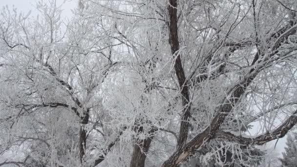 zimní park se sněhem pokryté stromy