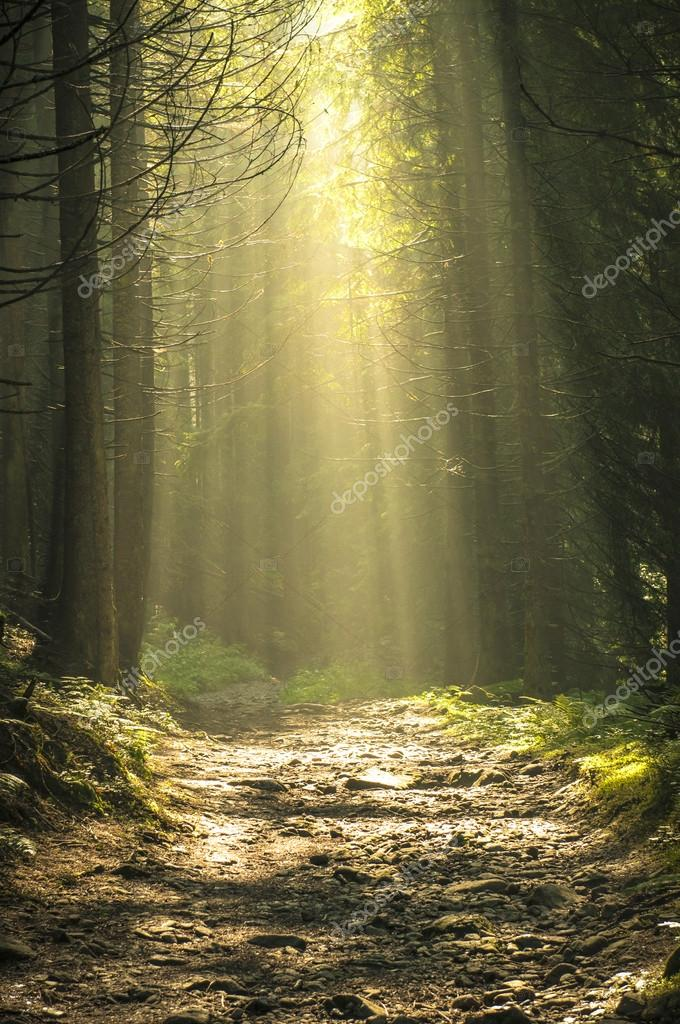 Фотообои Beautiful morning in the forest with sunbeams.