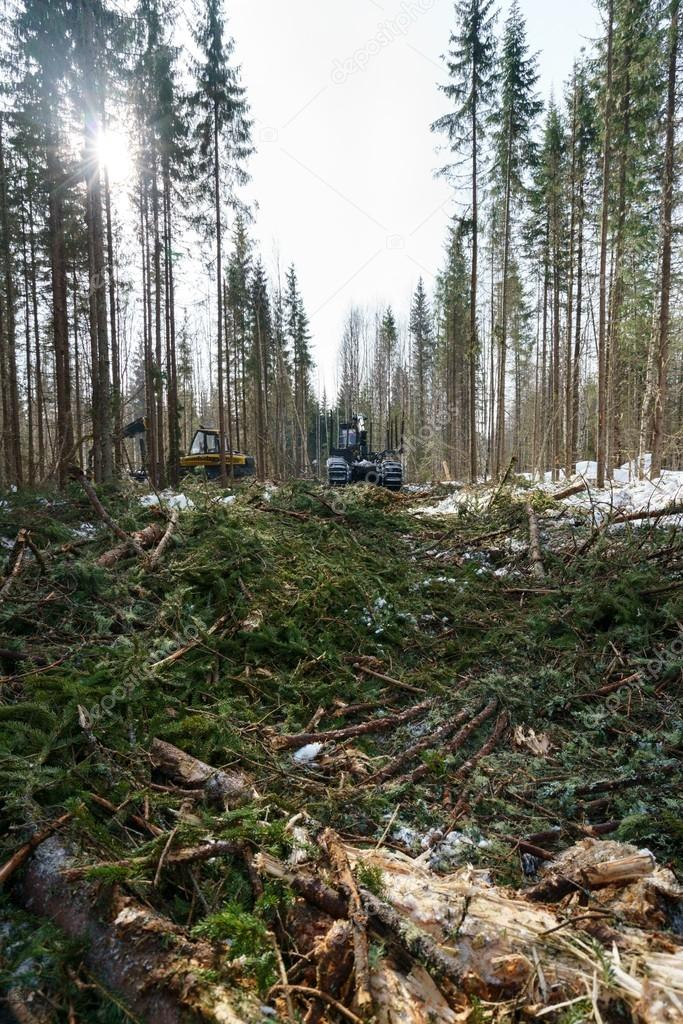 In forest it conducts work on wood harvesting