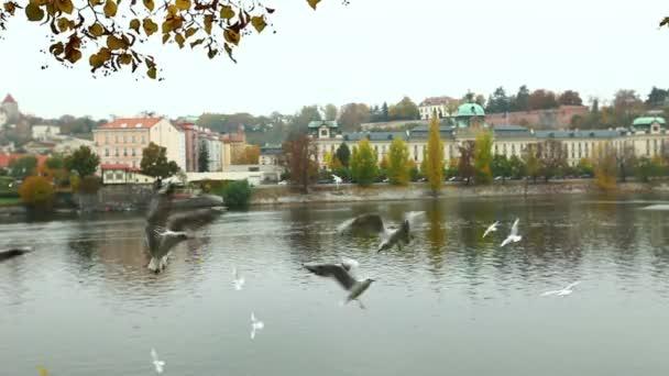 rackové úlovek potravin - fly poblíž řeky v Praze