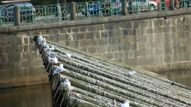 rackové odlétnout ze dřeva u řeky v Praze