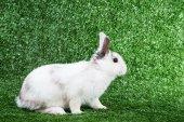 králík na trávě