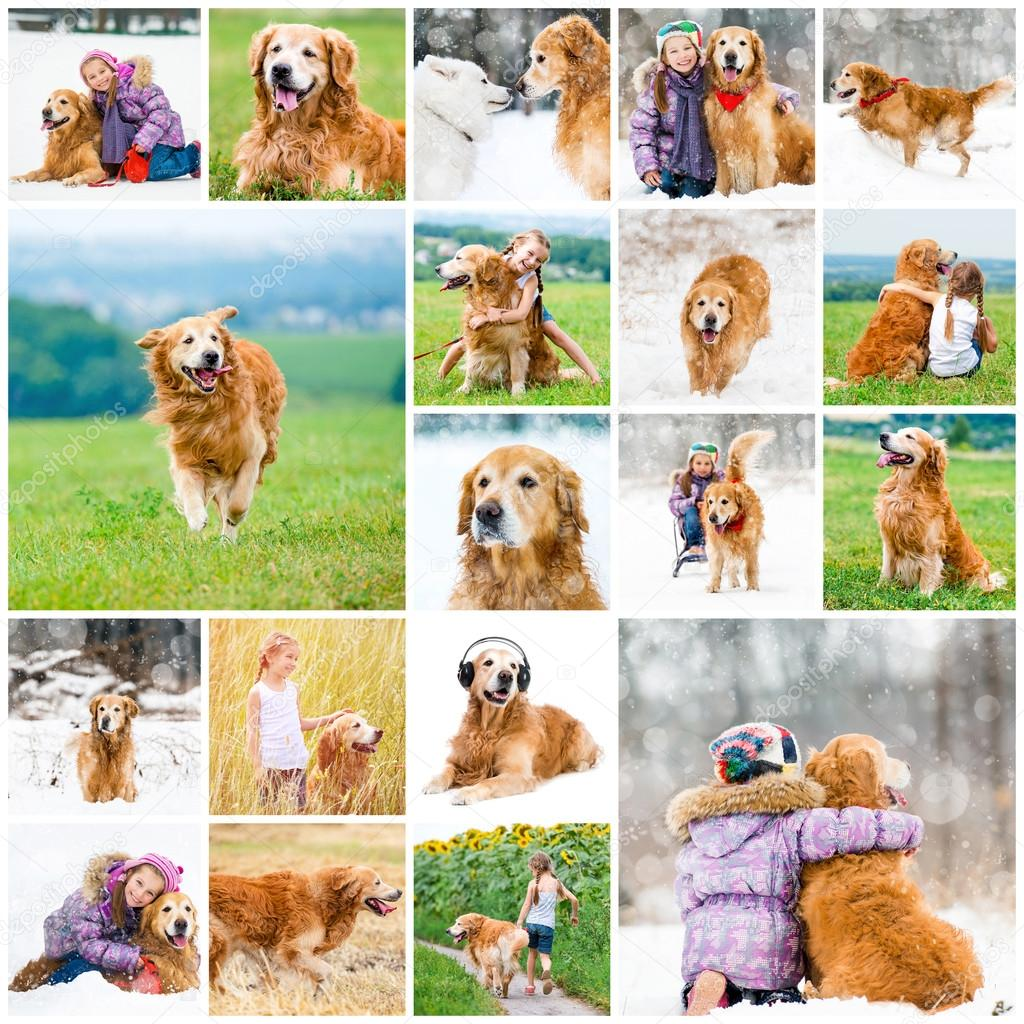 collage dog retriever and little girl