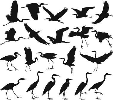Bird - herons