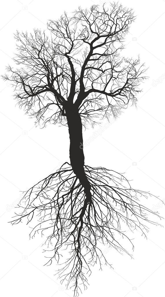 Morera sin hojas con la raíz — Archivo Imágenes Vectoriales © vlado ...