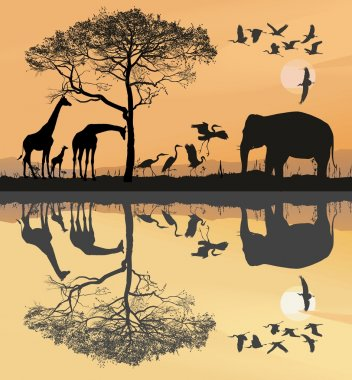 Savana with giraffes, herons and elephant