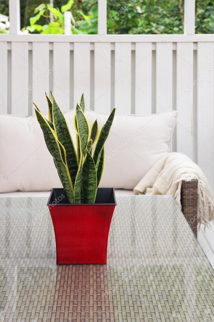 Vert De Plante En Pot Rouge Sur Table De Terrasse Photographie