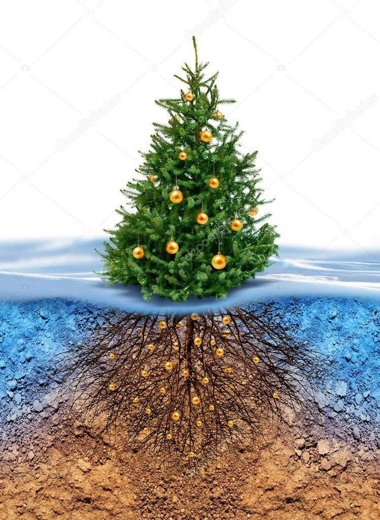 green weihnachtsbaum mit wurzeln unter stockfoto. Black Bedroom Furniture Sets. Home Design Ideas