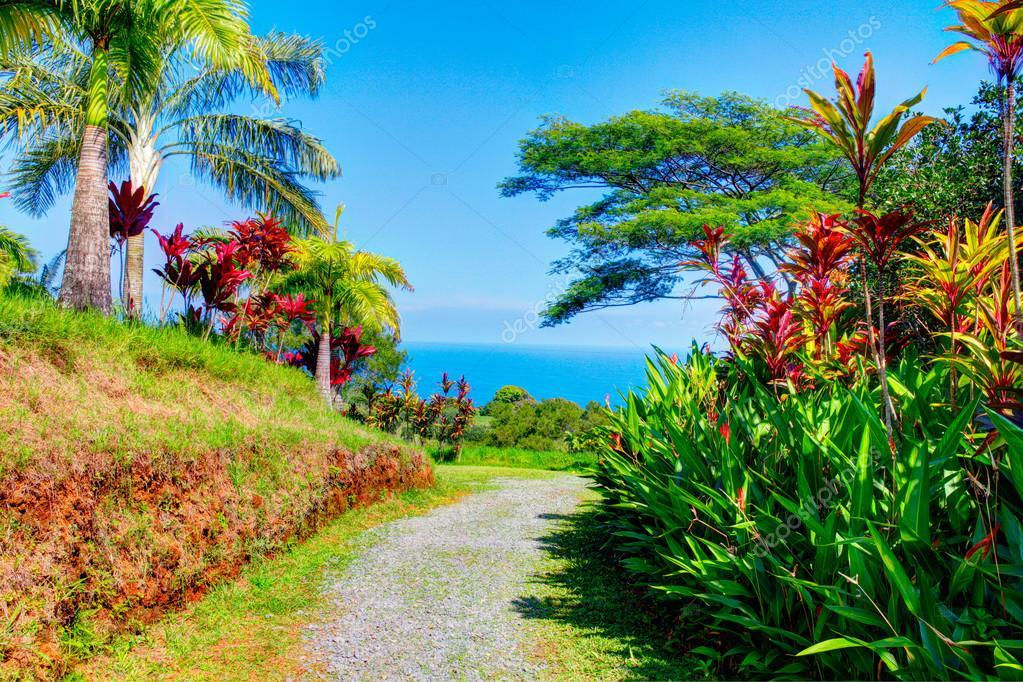 Palms In Tropical Garden Garden Of Eden Maui Hawaii Stock Photo