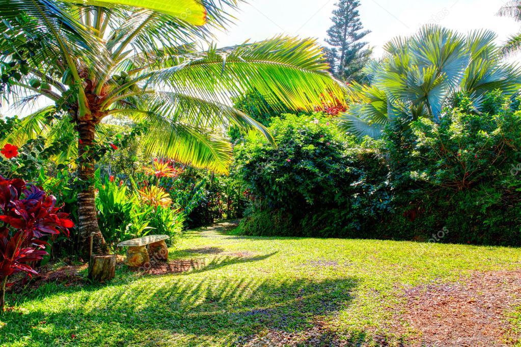 тропический сад гавайи фото планировали