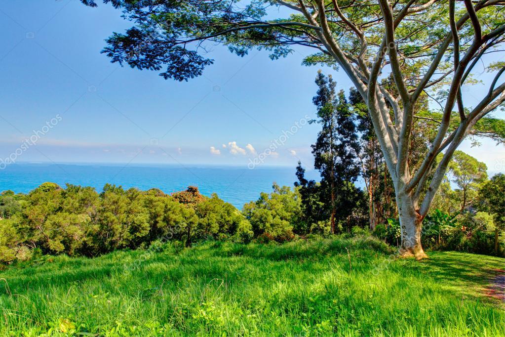 A tropical garden . Garden Of Eden, Maui Hawaii — Stock Photo ...