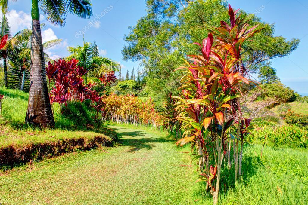 Palms in tropical garden . Garden Of Eden, Maui Hawaii — Stock Photo ...