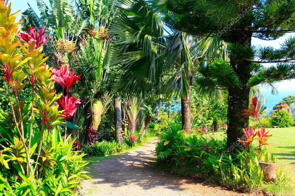 тропический сад гавайи фото продукцию