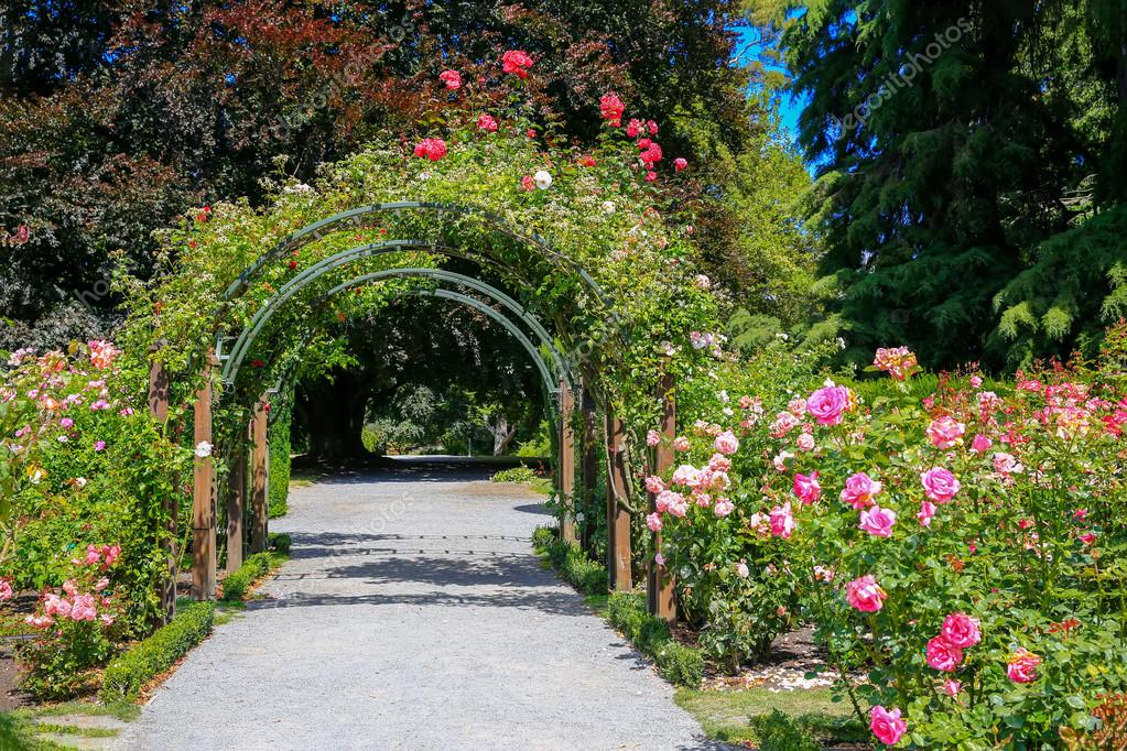 Rose Garden in Christchurch Botanic Garden, New Zealand.