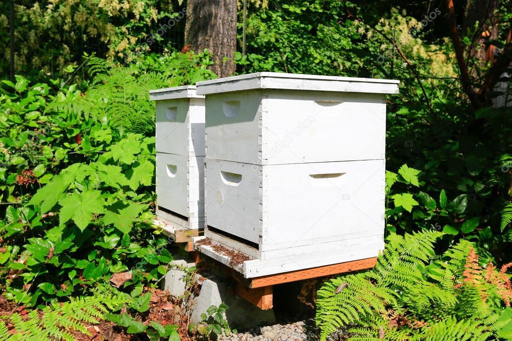 cajas de abeja para los apicultores Foto de stock iriana88w
