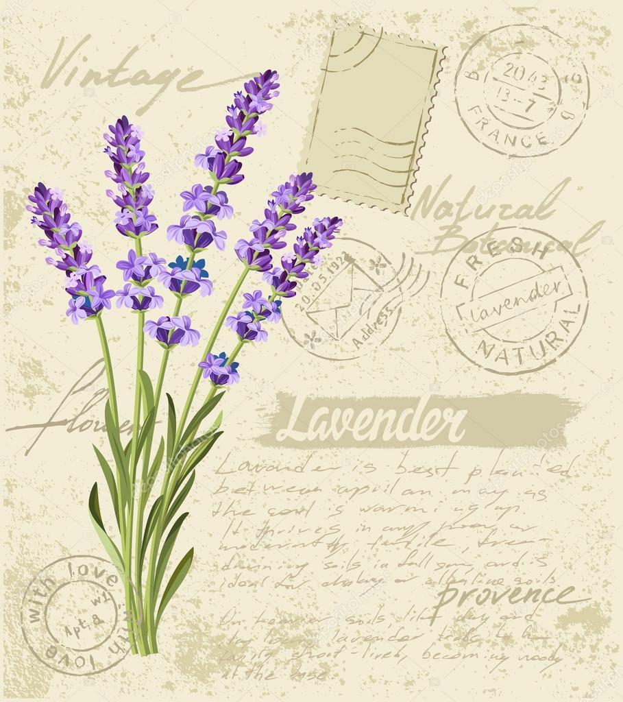 vector lavender set