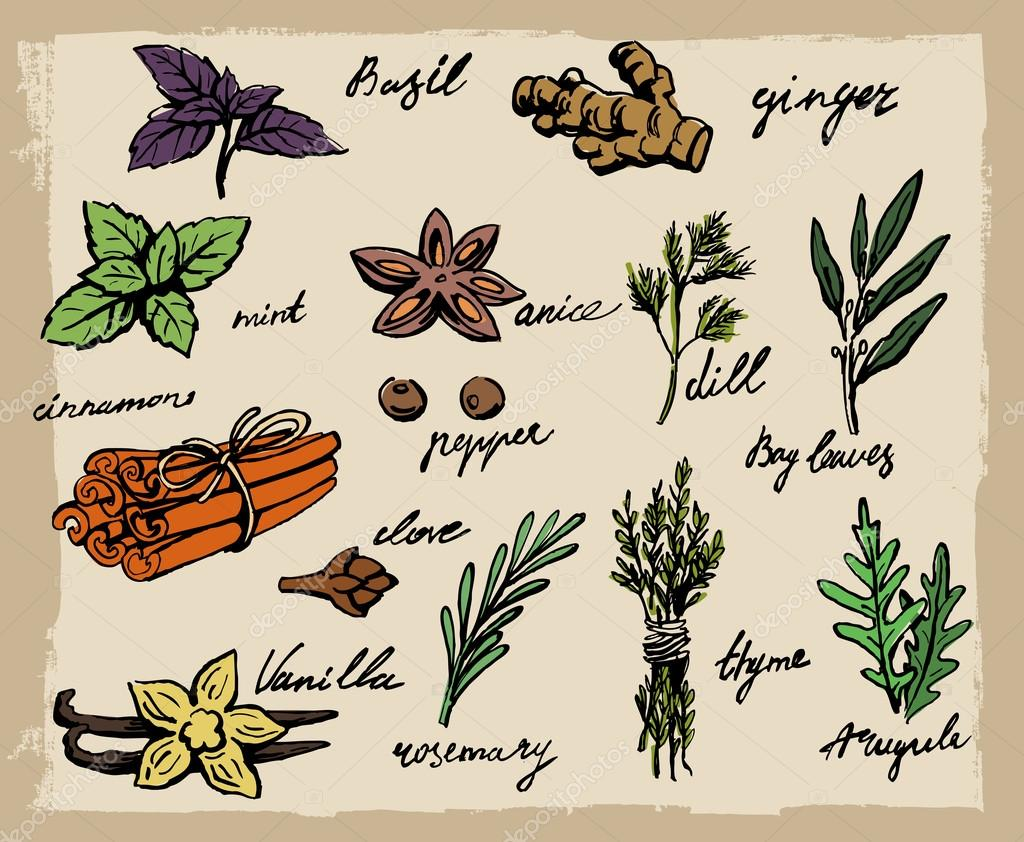 vector spices and herbs