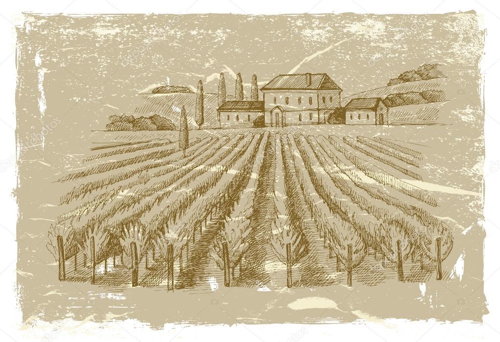 hand drawn wineyard