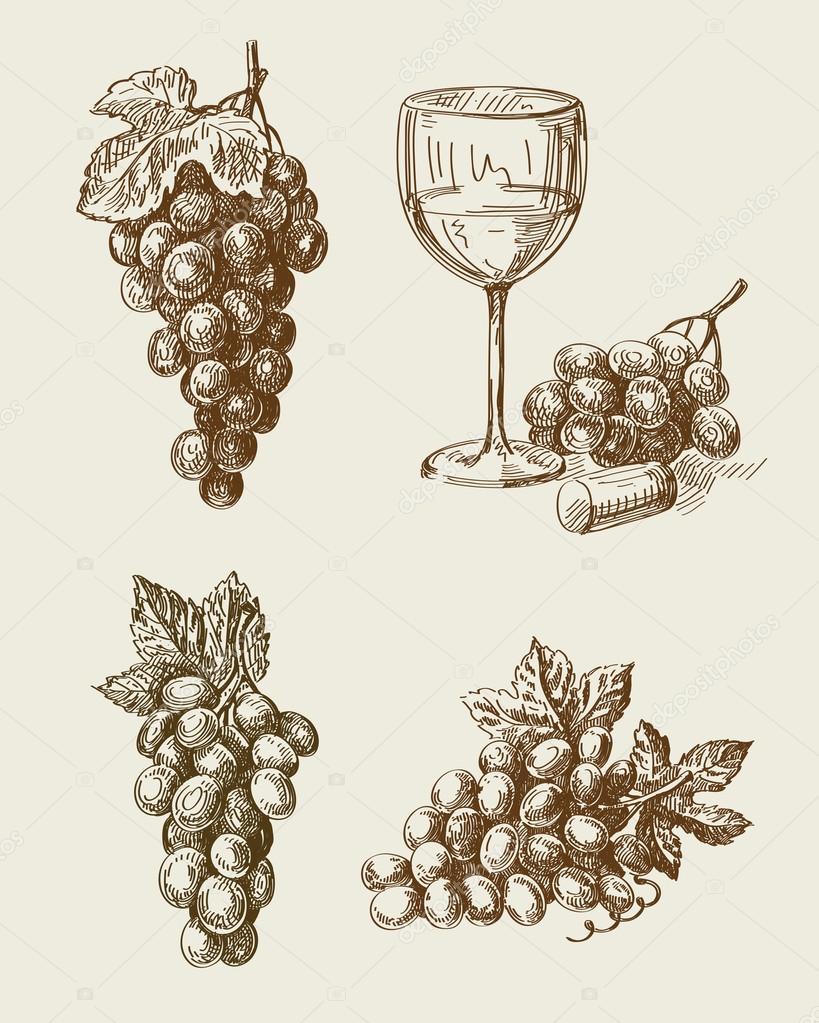 grape doodle