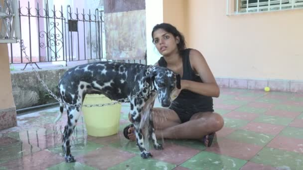 Girl bathing her Dalmatian dog