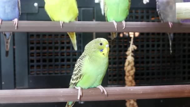 Moion of fancy parakeet in cage inside petsmart store