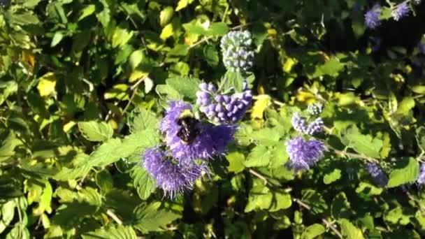 pohyb fialové květy