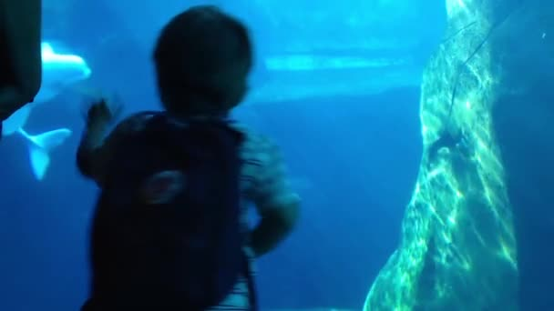 Sziluettjét gyerek néz a beluga, a Vancouver Aquarium.