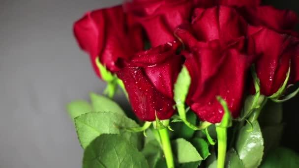 Červené růže s rosou kapky na černém pozadí