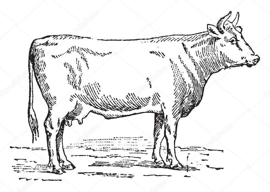 Bœuf aux oignons sur plaque chauffante