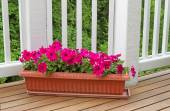 Colorful flowers in bloom on cedar wood deck with trees in backg