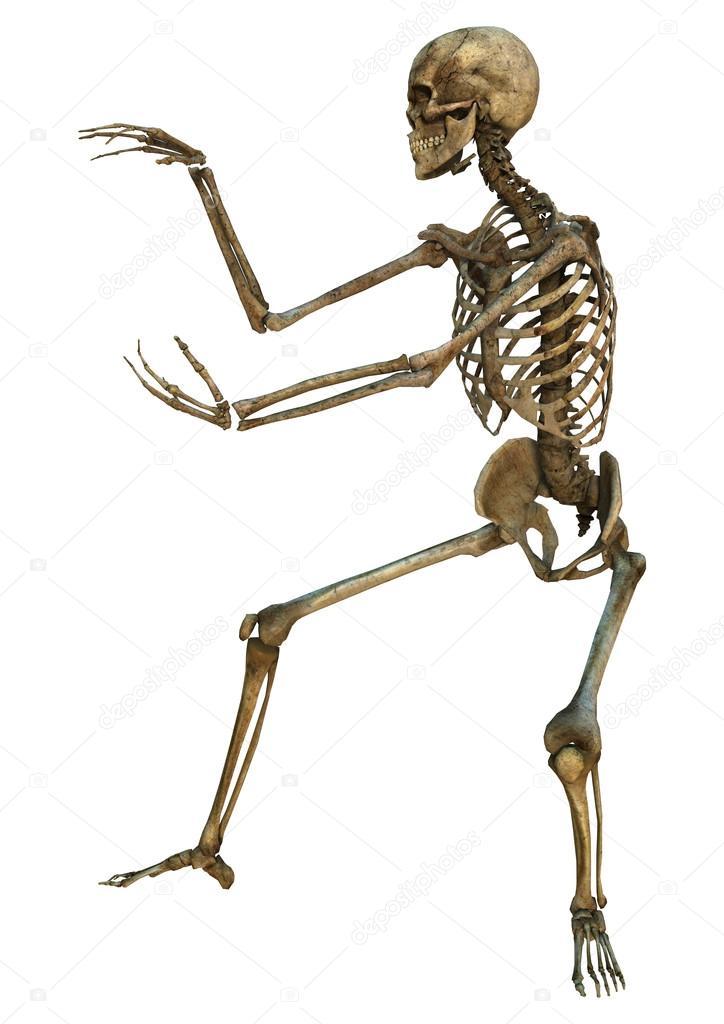 Human Skeleton Stock Photo Photosvac 57303339