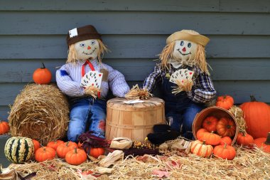 Scarecrows on brake don?t guard harvest and crow eat corn